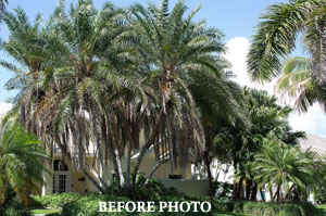 Tree Removal in Plant City