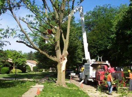 Tree service brandon