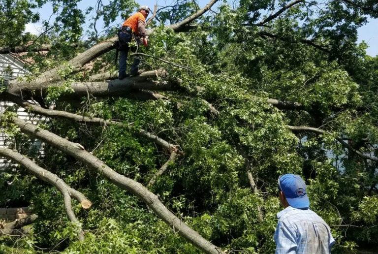 Tree Removal in Brandon Fl