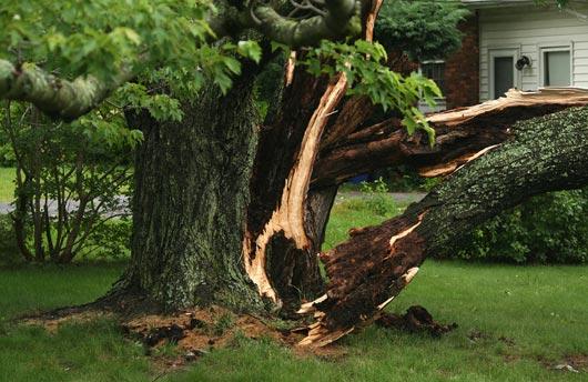Tree removal in Lakeland Fl