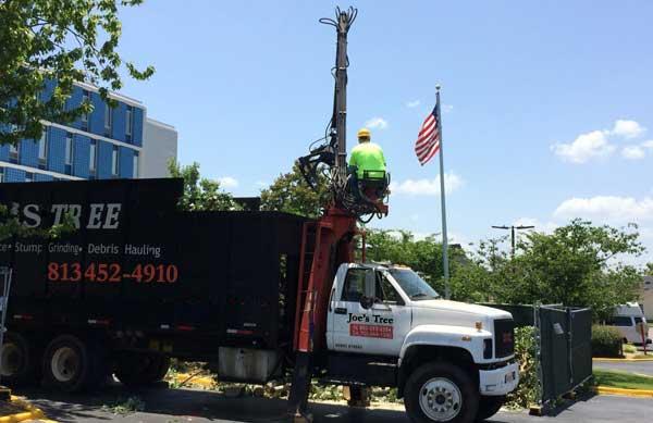 Tree service lakeland FL